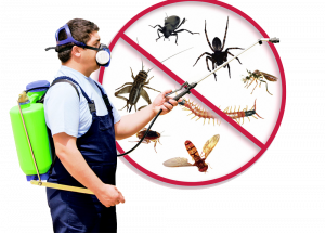 pest control malaysia prices